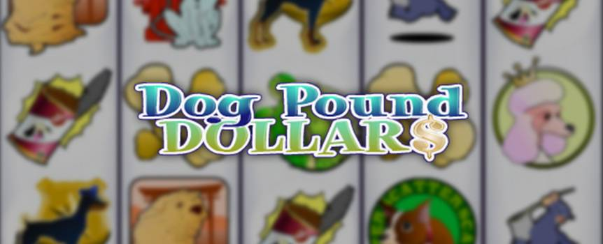It's time to let the dogs out! Save the most adorable little pooches from a life in the dog pound and you'll be rewarded with more than just loyalty and adoration. These furry little canines are man's best friend for good reason, because when you play this unassuming little 5-reel video slot you could soon be making a b-line from the pound to the bank. A pink Poodle, a Dalmatian wearing a fireman helmet, a wrinkly Wrinkle Dog, a lazy hound, and a funny little Chihuahua are endlessly entertaining. Throw them a tennis ball, serve them some dog chow and save these little pups from the harsh realities of pound life—you might just walk away with a pound of money.